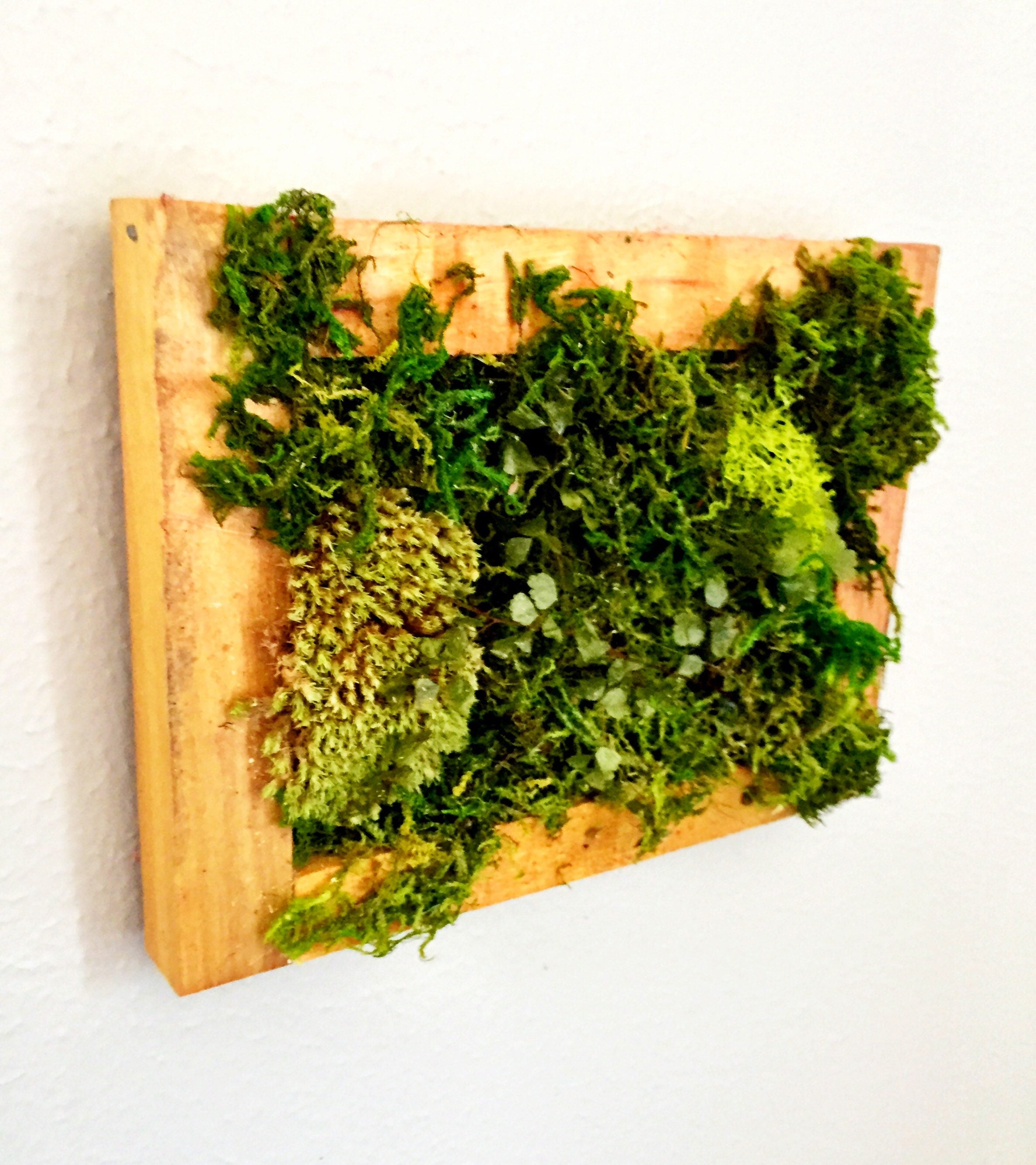 Wall Sculpture Moss Wall Art Plant Painting Nature Wall
