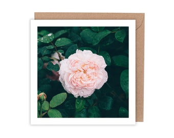 Pink Rose Flower Greeting Card