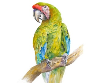 Parrot painting   Etsy