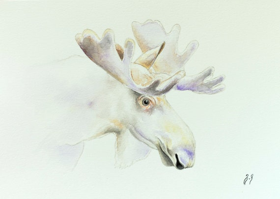 Moose Watercolor Painting Moose Wall Art Arctic Animals Kids Room Wildlife Watercolor White Moose Home Decor Moose Gift For Him