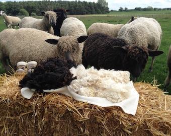 150gms Wensleydale natural brown fleece
