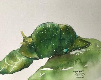 Nudibranch painting, underwater painting, sea creature, original painting.