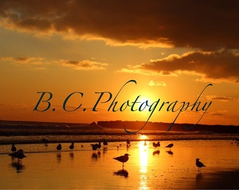 Sea Birds in Sunset