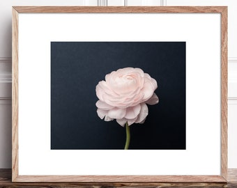 Pink Ranunculus Flower Photography Print Download, Printable Botanical Art, Wildflower Floral Print