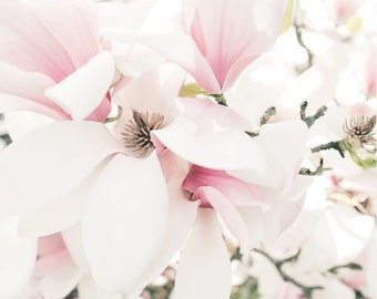 Flower Photography Farmhouse Print, Pink Magnolia Floral Print