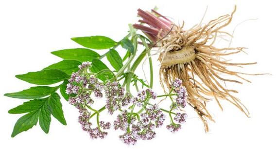 Valerian root capsules | Etsy