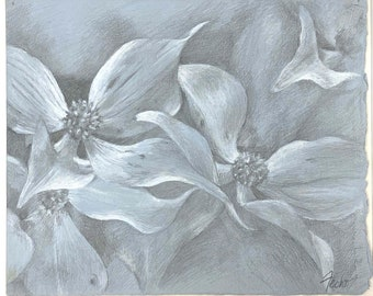Dogwood Blossoms - Silverpoint