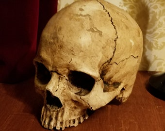 factory authentic 83162 d6224 Realistic Aged full size Human Skull  Free Shipping