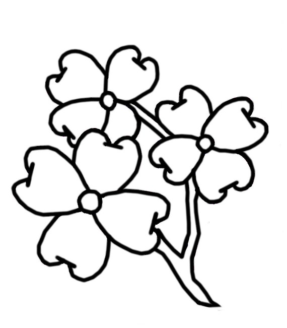 Coloring Pages Dogwood Flowers