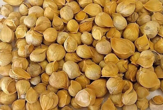 Ajo Japones 150 Japanese Garlics Etsy