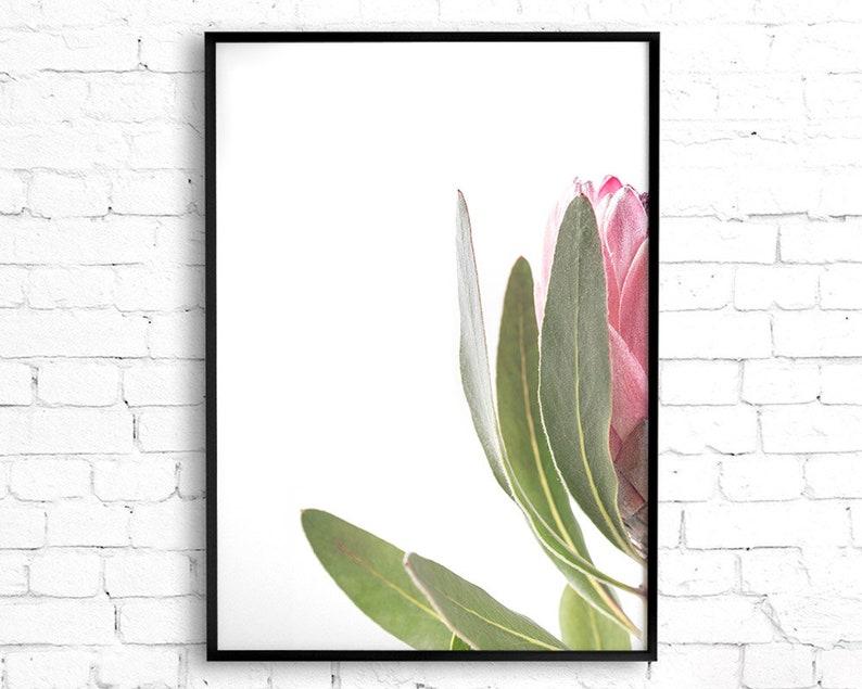 Pink Flower Decor Flower Wall Art Botanical Print Protea Print Set of 2 Printable Poster Digital Download Australian Native Photography