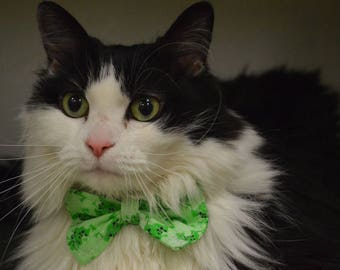 Leap Frog Cat Bow Tie