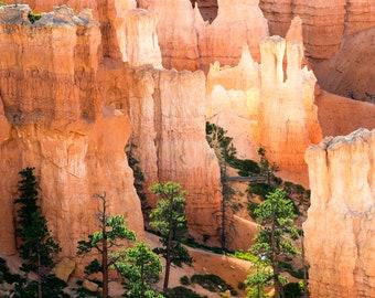 Morning Hoodoos   Bryce Canyon National Park, Utah