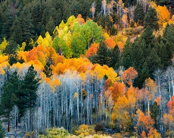 Changing Seasons |  Hope Valley, California