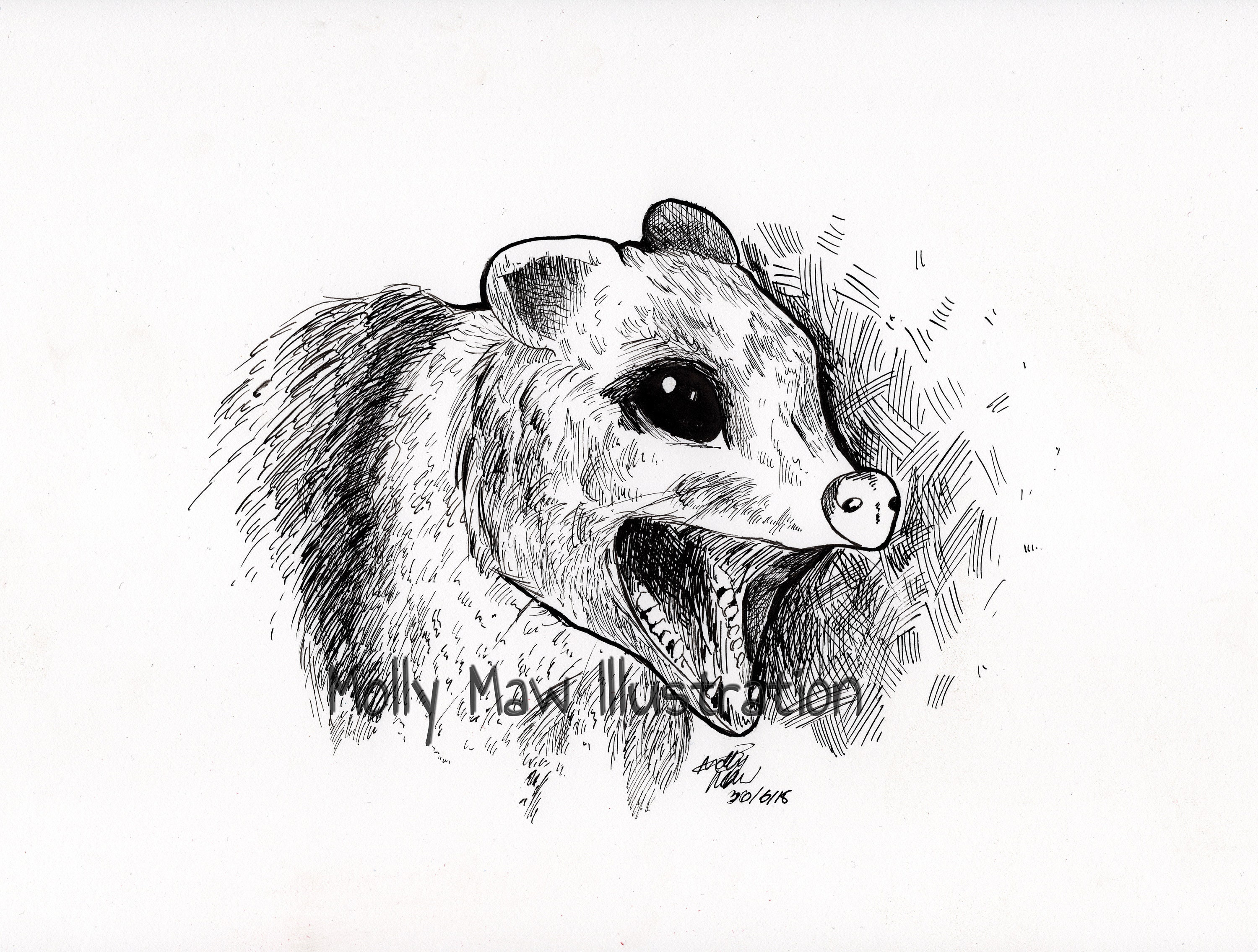 Fine Art Print Original Drawing Possum Drawing Possum Etsy