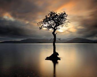 Lone Tree at Sunset Print  / Lone tree wall print / Loch Lomond Print / Tree in water / Lone tree print / Nature Photography / Sunset