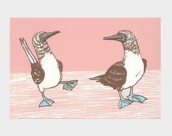 Gannets – silkscreen print, drawing, birds