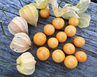 100 Seeds Poha Berry Physalis Peruviana Cape Gooseberry Edible Fruits