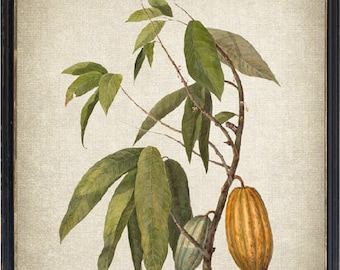 Cacao Tree Art Print Etsy