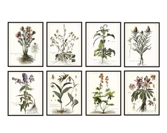 French Botanical Printables 11x14 Set of 8, Antique Botany Illustrations, 17th century Flowers Plants Wall Art Prints INSTANT DOWNLOAD