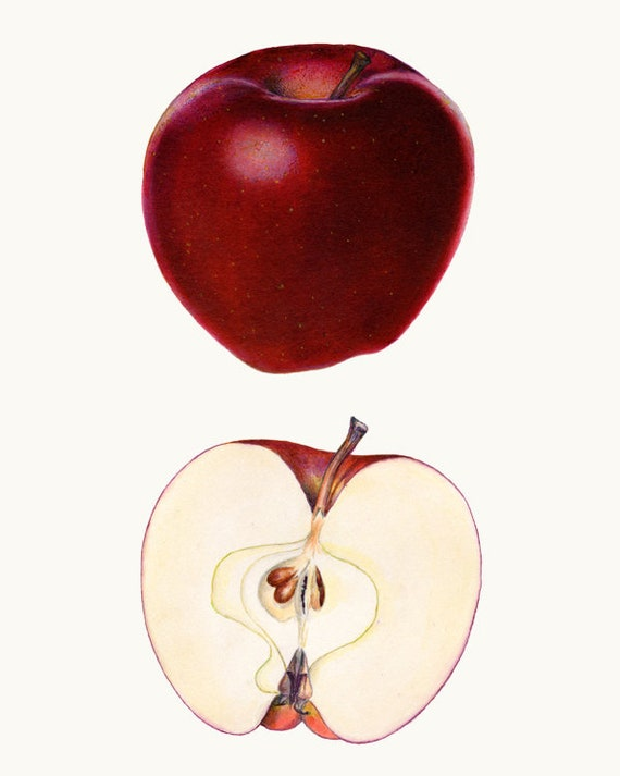 Download Red Delicious Free PNG, icon and clipart | FreePngClipart