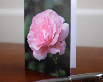 Rose, Flower Photograph, Fine Art Photography, Flower Collection, Greeting Card