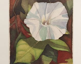 Morning Glory Limited Edition Watercolor print