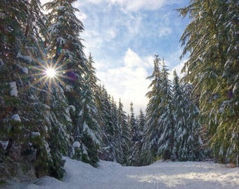 Winter Morning Sunburst Through Snowy Evergreen Trees Snow on Ground Blue Sky White Wispy Clouds National Forest Washington State Sunrise