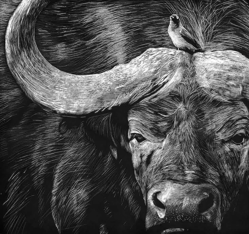 South Africa's Big Five image 0