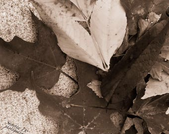 Fall leaves in sepia  photo, print, wall hanging, art, flower decor, botanical decor, nature decor