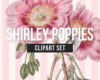 Illustrated Poppies Clipart Set