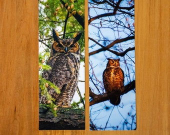 Great Horned Owl / Photo Bookmark / Owl / Kentucky / Reversible Bookmark / Louisville / Wall Art / Home Decor / Photography / Great Horned