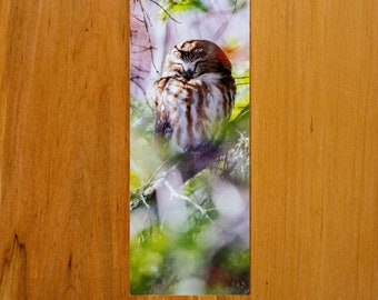 Saw-Whet Owl / Photo Bookmark / Owl / Kentucky / Reversible Bookmark / Duluth / Wall Art / Home Decor / Photography / northern saw-whet