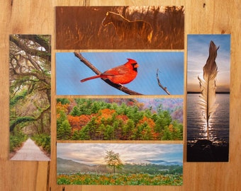 Photo Bookmark / 3 Reversible Bookmarks / Kentucky / Georgia / Tennessee / Cardinal / Horse / Sunset / Feather / Photography / Book Club