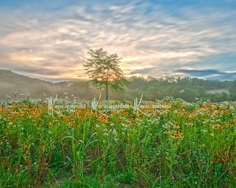Sunset / Tree / Kentucky / Print / Sunset / Wildflowers / Landscape / Photograph / Louisville / Wall Art / Home Decor / Photography