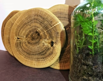 Wood slices , natural wood coasters , wood slice coasters , rustic coaster set , Wedding Gift , gift for him, gift for her, Anniversary Gift