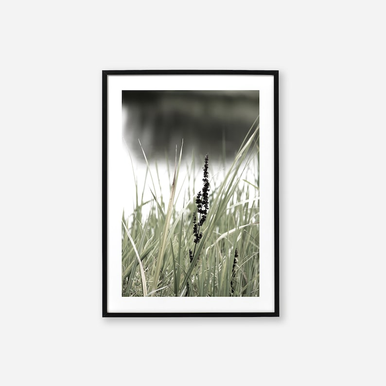 Wetland Photographic Prints