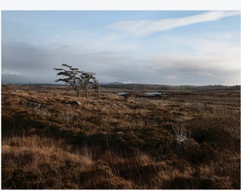 Irish Countryside, Co Donegal trees, Ireland Photography