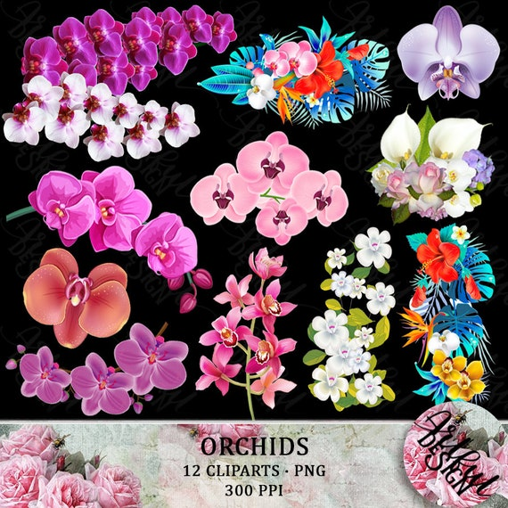 Orchid Clipart Floral Clipart Orchid Clip Art Orchid Flower Etsy