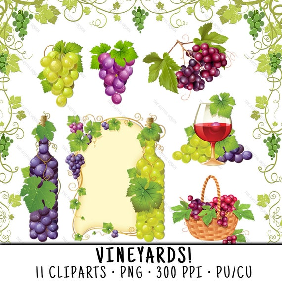 Grapes Clipart Wine Clipart Vineyard Clipart Grapes Clip Art Wine Clip Art Vineyard Clip Art Green Grapes Png Red Grapes Png