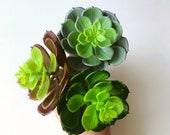 Faux echeveria, terrarium succulents, 1 piece succulent, single succulent, 8 cm 3 39 39 diameter, Succulent collection, Minigarden