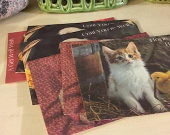Blank Animal Greeting Cards