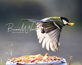 "Great  Tit Image ""Lift Off"""