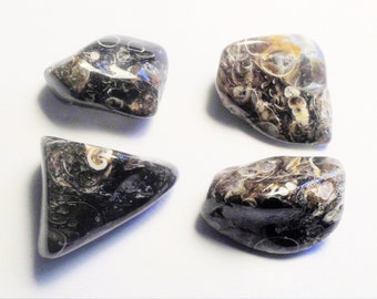 Turritella Agate Freeform Cabochon from Wyoming 25x42x6mm