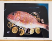 Limited edition Snapper colour photograph