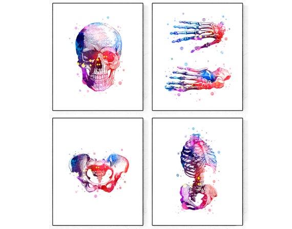 Human Skeleton Print Set Skull Watercolor Pelvis Poster Rib Etsy