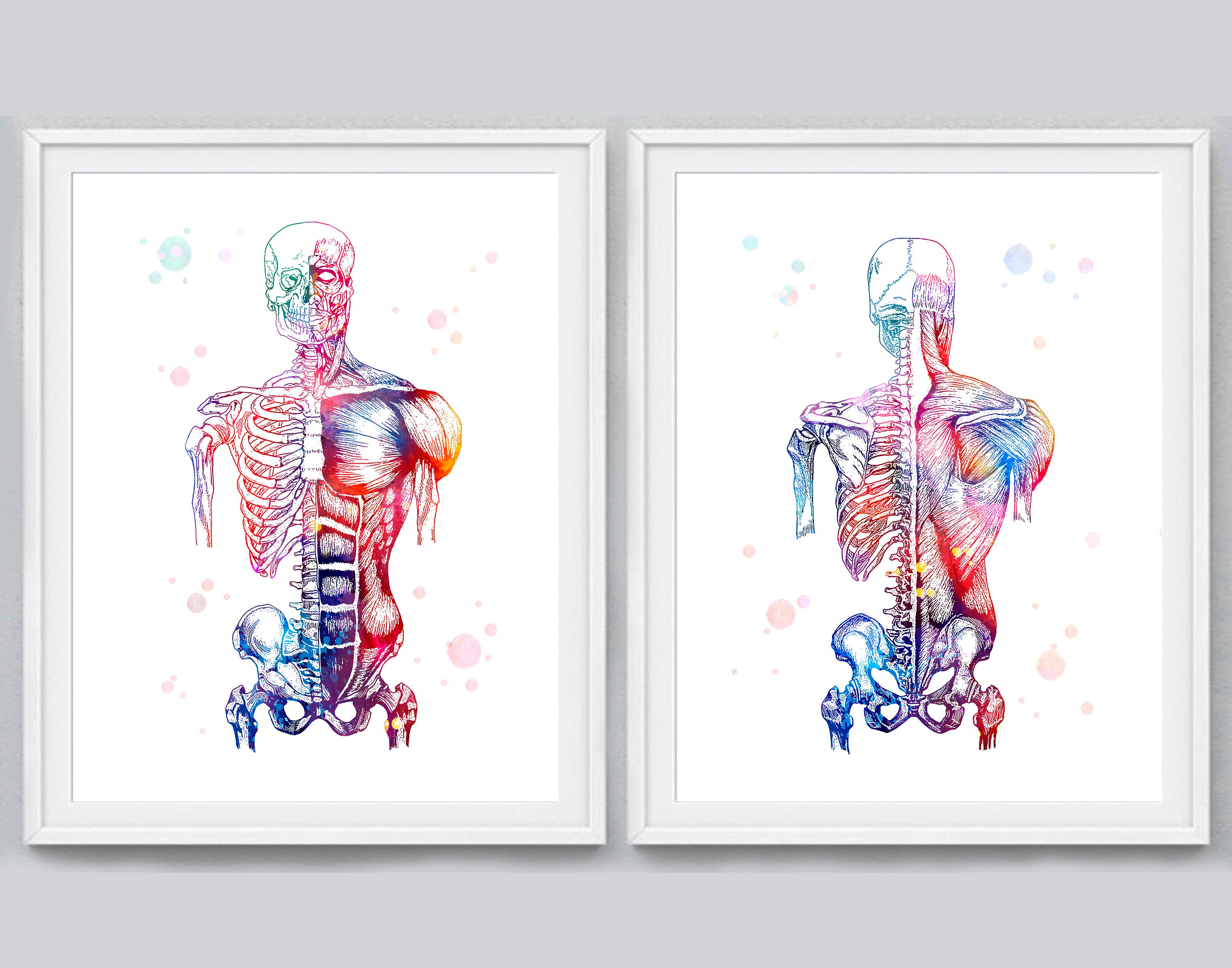 Watercolor Human Muscles Print Muscular System Skeleton Etsy