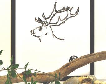 Hirsch, Deer, Waldbewohner