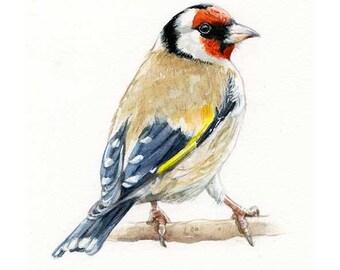 Goldfinch (Carduelis carduelis) - Watercolor Original (not a print)