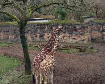 Vintage 1970s Portland Oregon Zoo Souvenir Monkey Back Scratcher